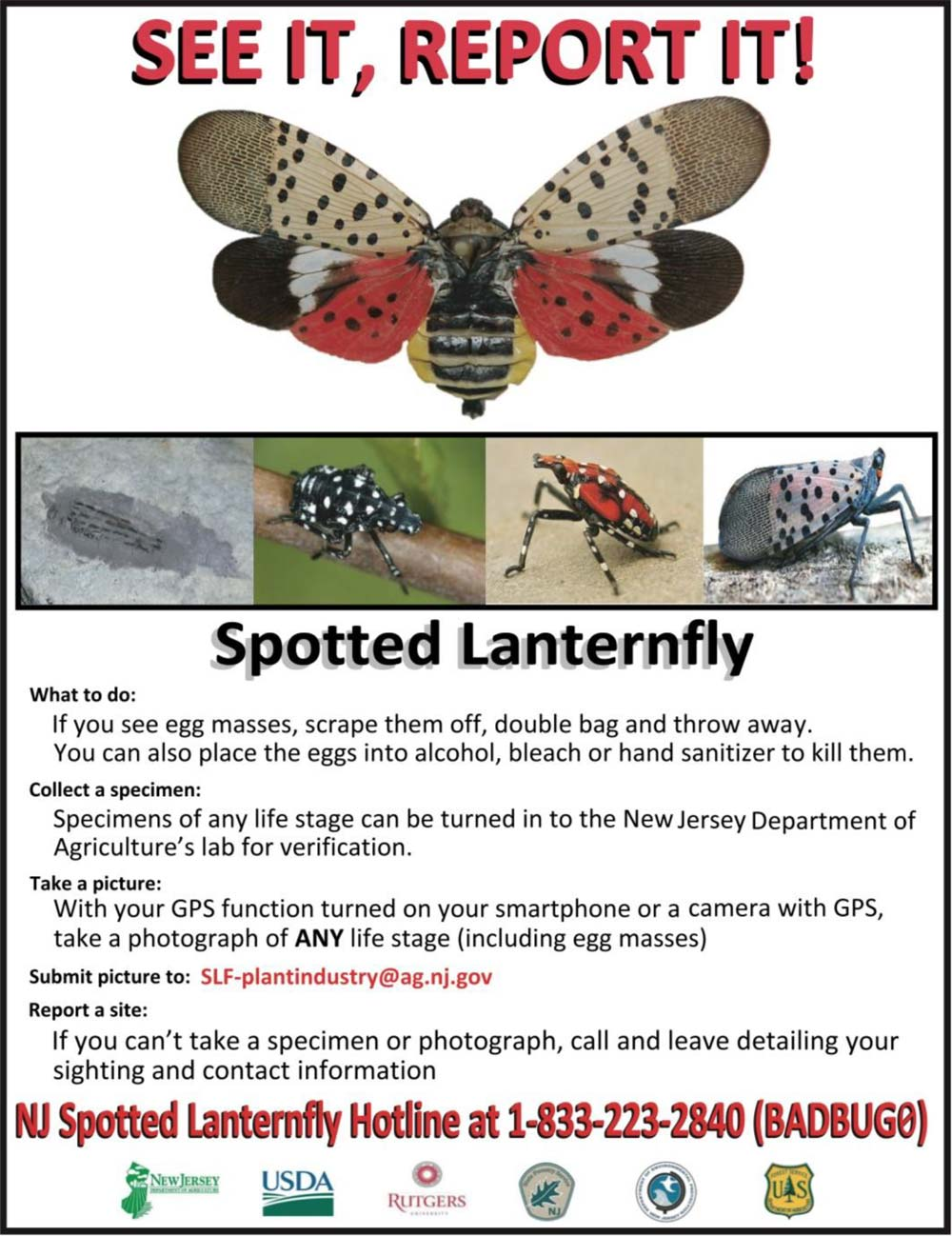 Flier for the SPOTTED-LANTERN-FLY
